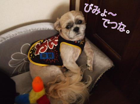 ・搾シ鳳7245355_convert_20110725021208
