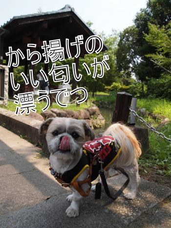 ・搾シ単7245370_convert_20110726015918