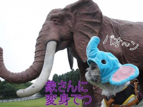 ・搾シ撤7245504_convert_20110728144541