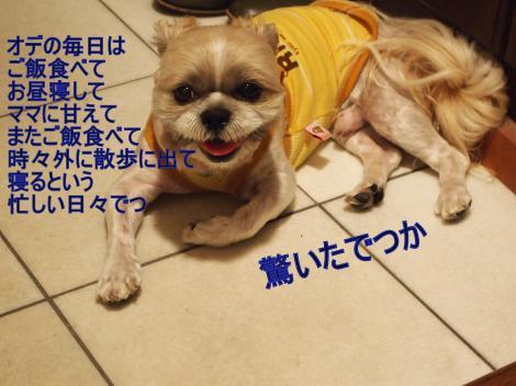 ・搾シ捻7145201_convert_20110806014048
