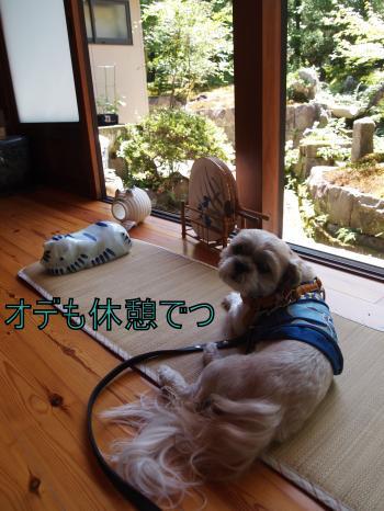 ・搾シ鳳8045663_convert_20110810010836
