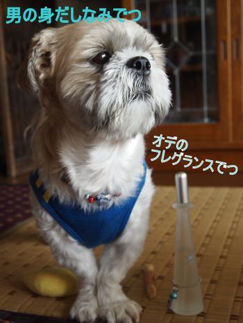 ・搾シ姫8175854_convert_20110817165613