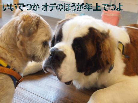 ・搾シ姫8185882_convert_20110819010919