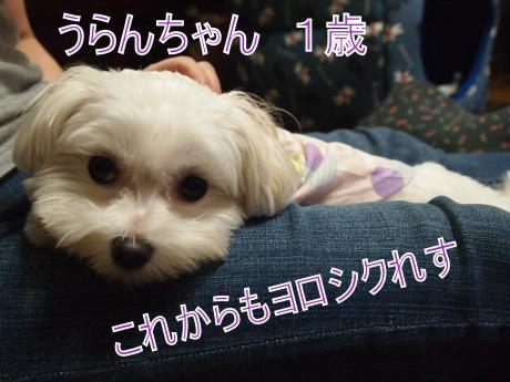 ・搾シ姫8155838_convert_20110819010806