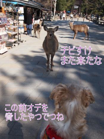 ・搾シ善2221722_convert_20110903031722