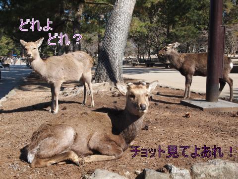 ・搾シ撤2221721_convert_20110903031906
