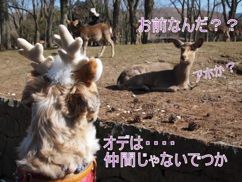 ・搾シ捻2221736_convert_20110903031954
