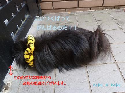 006_20111204164445.jpg