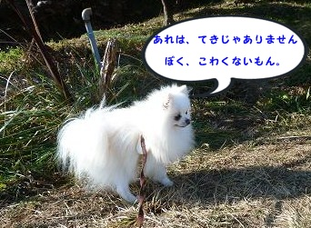 013_20120118215603.jpg
