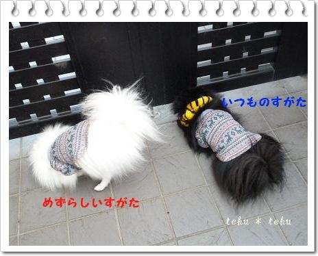017_20120125210447.jpg