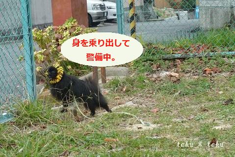 024_20111130222250.jpg