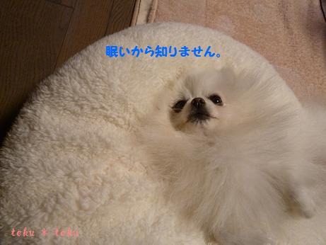 028_20111115225751.jpg