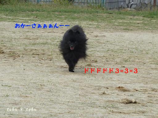 045_20111102165425.jpg