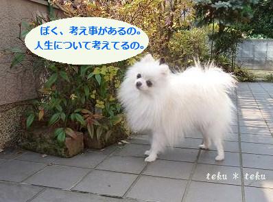 ne_20111204164835.jpg