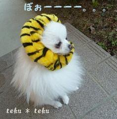ne_20111212224937.jpg