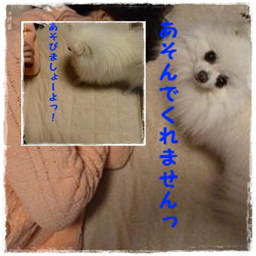 page_20120203214348.jpg