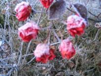 92冬 blog