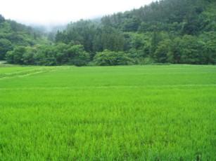 field.blog.jpg