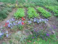 garden.blog.jpg