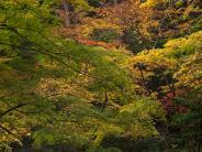 2011小国神社の紅葉 その2