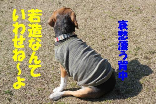 IMG_4708-1.jpg