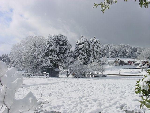 200801雪の日