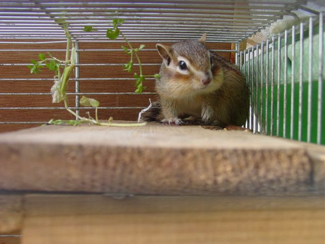 巣箱の上のリスオ