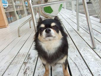 スマイル犬1.28-021