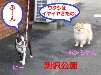 ポンちゃん・ピー