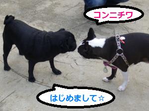 駒沢ドッグラン