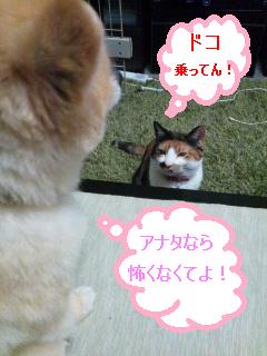 ポンちゃん・フジコ