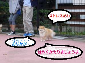 ポンちゃん