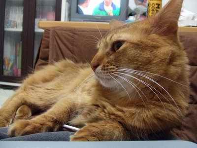 サイズ変更再露出猫2007_1203(013)