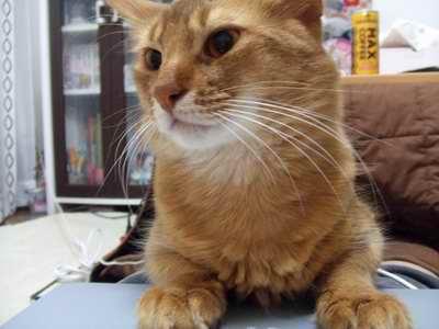 サイズ変更再露出猫2007_1203(015)