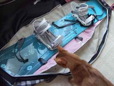 サイズ変更再露出猫2007_1209(001)