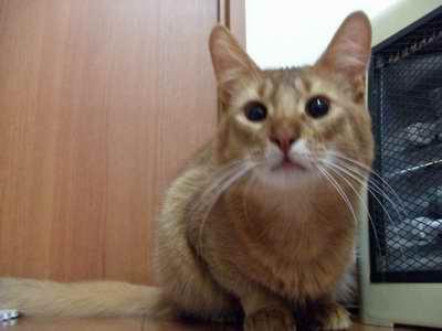 サイズ変更再露出猫2007_1203(005)