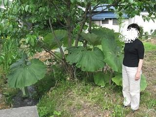 20110611-12秋田 087