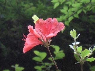 20110618-19生杉 021