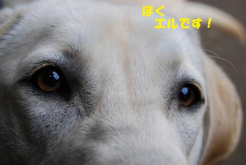 DSC_0476_convert_20120107163945.jpg