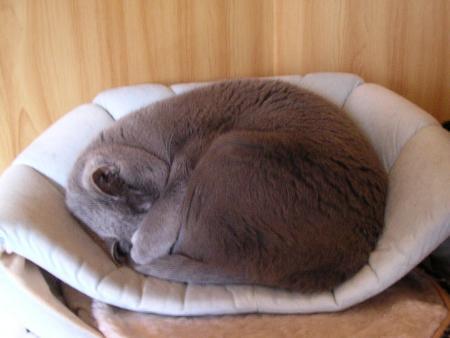 猫団子_convert_20120224153652