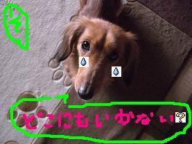 CIMG1199.jpg