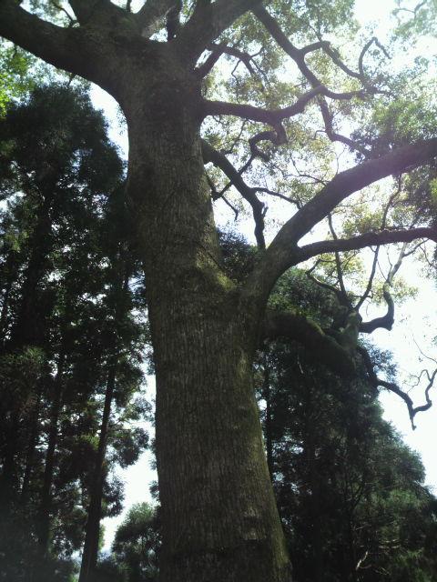 でかい木2