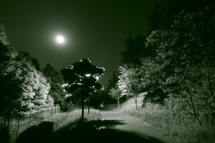 20110521緑の夜道2a