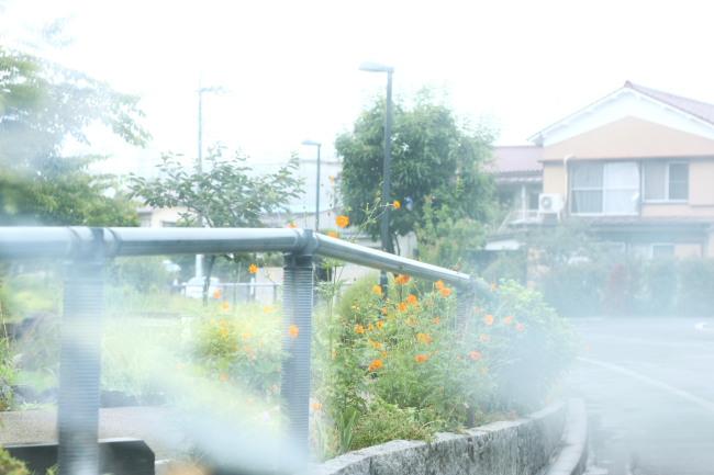 20110821江川せせらぎ遊歩道1