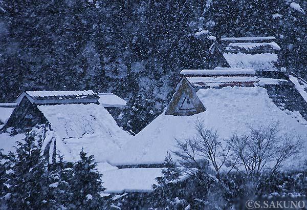 雪の里024W0359_2
