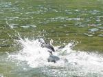 フリーダムの泳ぎ