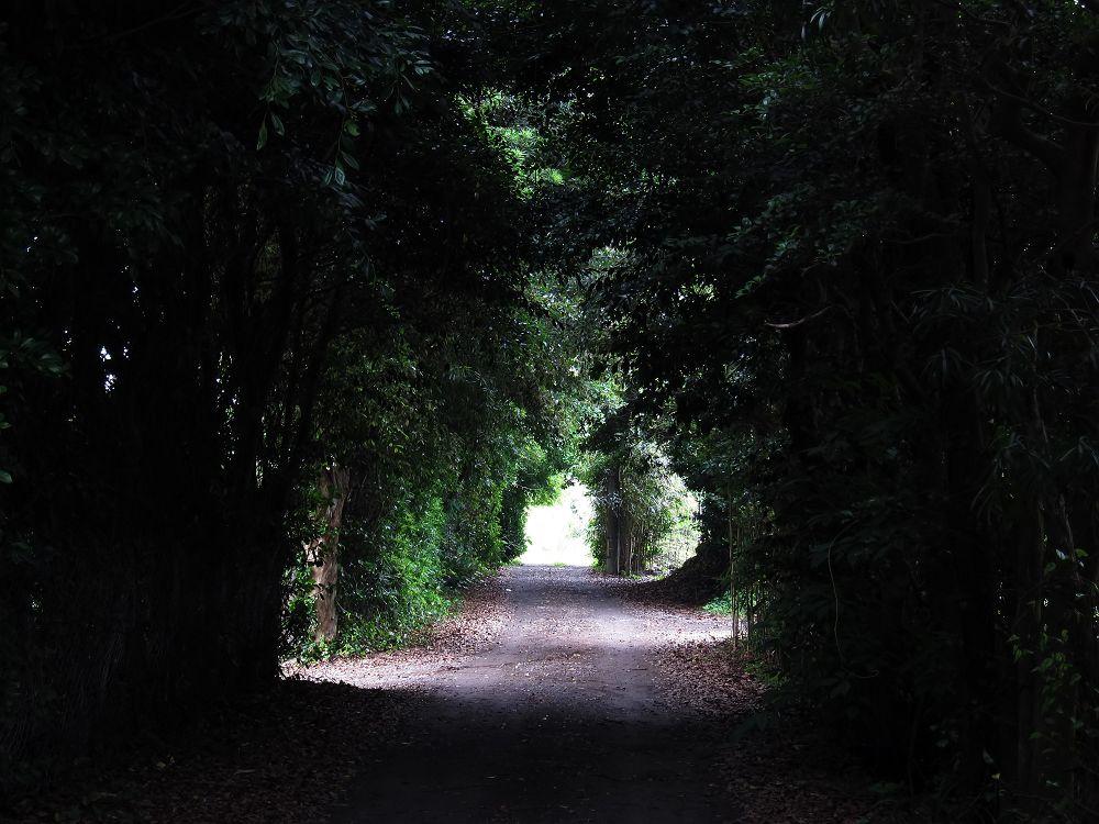 薄暗い小路