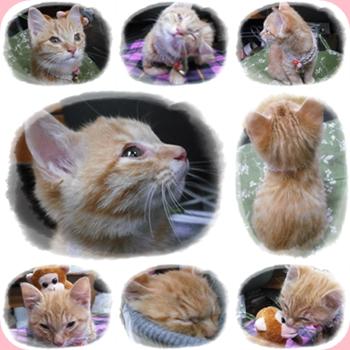 cats KONEKO1016