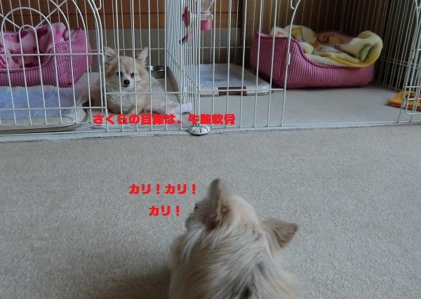 CIMG4933_20111128195519.jpg