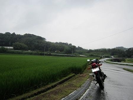 田んぼ 1